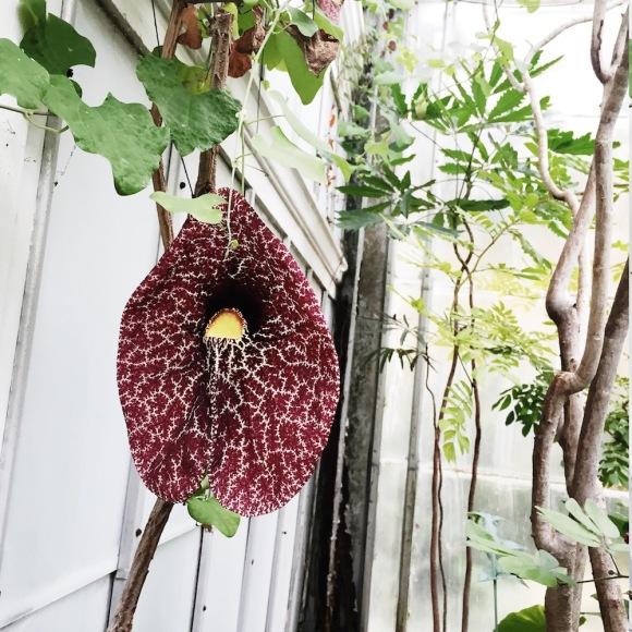 Flower Wellesley College Greenhouse