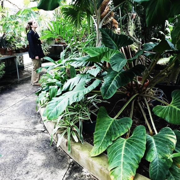 Wellesley College Greenhouse