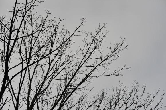 Late fall sky
