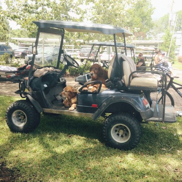 TCYC Dogs in a Golf Cart Kemah Texas
