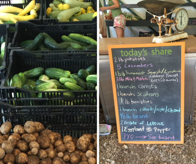 Stearns Farm July Share